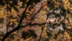 2015 10 26 Jezioro Szmaragdowe jesień 20.jpg