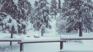 Czy na Święta potrzebny jest śnieg?