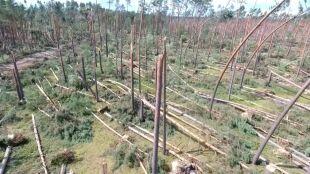 """""""26 tysięcy hektarów lasu zniknęło zupełnie"""""""