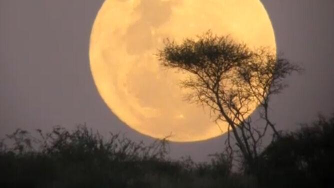 Już w sobotę zajaśnieje Super Księżyc. Czy przyniesie zagładę?