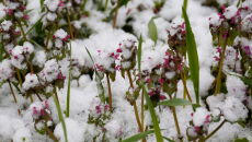 Śnieg na Węgrzech (PAP/EPA/Gyorgy Varga)