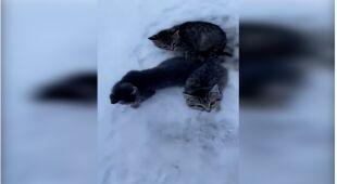 Zwierzętom pomógł nafciarz