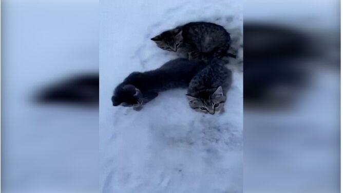 Kotki przymarzły ogonkami do ziemi