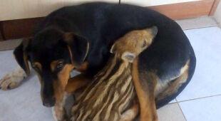 Przytulają się nie tylko ludzie. Przyjaźń Dyzia i Frytki