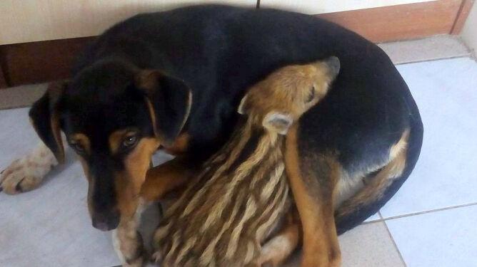 """Piesek Dyzio adoptował loszkę Frytkę. """"Razem śpią, liżą się, czyszczą"""""""