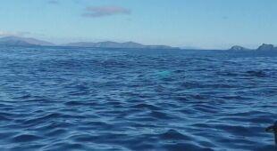 Obserwacje trzech naukowców z Irish Whale and Dolphin Group